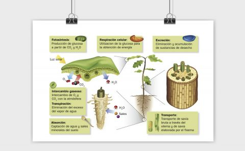 Biogeologia
